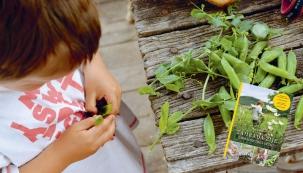 Hledáte-li inspiraci pro letošní zahradnickou sezónu, nepřehlédněte novou knihu s názvem Zahrada žije - zahradničení s dětmi. Blogerka Anita Blahušová v ní využila zkušenosti z reálného pestrého roku s dětmi na zahradě a doplnila ji krásnými fotografiemi, návody a ilustracemi.
