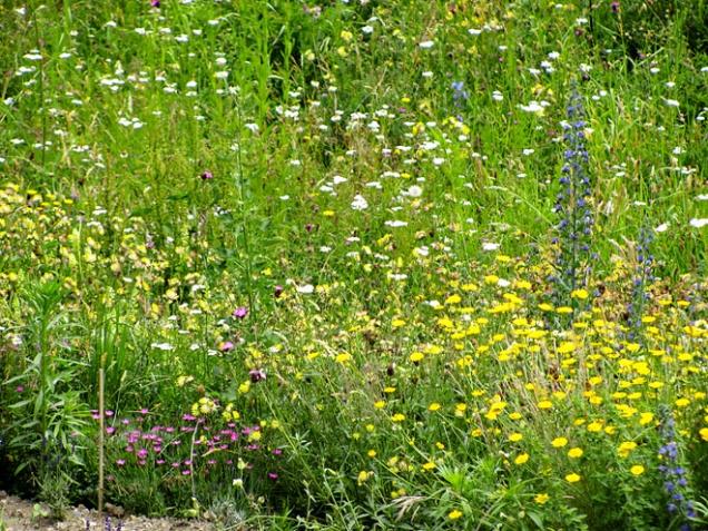 Volně rostoucí trávník se hodí na hůře dostupná místa, například do svahu. Hodí se také do velkých sadů a zahrad.