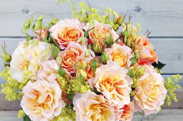 Landlust je keřová růže vysoká asi 120cm. Lze ji pěstovat jako solitér, jako součást plotu i ve smíšeném záhonu. Kvete bohatě celou sezonu a má minimální nároky na péči.