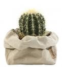 V jejich stylu: Papírový sáček nakvětiny ze speciálního pratelného papíru, více barev avelikostí navýběr, cena cca od430Kč, www.uashmama.com