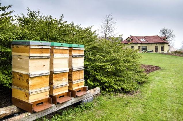 Medonosným včelám poskytují bohatou pastvu různorodé domácí a šlechtěné dřeviny, trvalky v záhonech i trávník prokvetlý pampeliškami.