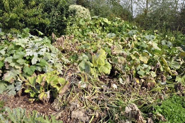 Podle průběhu počasí vzáří nebo říjnu začnou rostliny odumírat. Není to hezký pohled, ale je to nezbytný koloběh života asmrti, aby mohly být stále nové avelkorysejší začátky azrody. Teď to zdálky vypadá, jako že není žádná úroda, jenom nepořádek...
