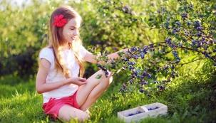 Od května začíná zrát první ovoce. V zahradě se hlásí o slovo borůvky, zimolez kamčatský, muchovníky, brusinky, později také třešně májovky a jahody. Kromě toho se lze těšit i z prvních kvetoucích květin.