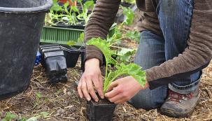 BLOG: Proč pěstovat domácí zeleninu (Foto: Jaroslav Svoboda)