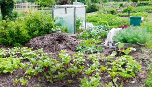 V supermarketu ji určitě nenajdete, zkuste to sami, radí naše průvodkyně zahradami a nabízí poněkud netradiční způsoby pěstování zeleniny. Za trochu námahy to jistě stojí.