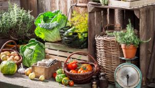 Babí léto sice láká k odpočinku, ale rozhodně to neznamená konec prací na zahradě. Nadcházející měsíc je obdobím sklízení úrody a vybízí i ke stavbě nejrůznějších přístřešků a sklepů, kde budou drahocenné plody naší práce v suchu a v bezpečí.