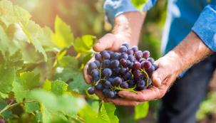 Když léto pomalu přechází vpodzim, nastává čas sklizně hroznů adalšího ovoce. Zahrádkáři to přináší radost, ale také starosti. Tento článek se pokusí poradit, jak si súrodou poradit co nejlépe.