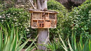 Šišky, slámu, duté stonky, dřevo i jiné materiály můžete zakomponovat do hmyzího hotelu. Hmyz vám na oplátku pomůže se škůdci úrody.