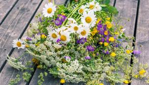 Lidová moudrost praví, že v srpnu již nelze slunci mnoho věřit. Přesto si ale na zahradě můžete stále užívat vrchol sezony, sklízet ovoce a zeleninu a obdivovat velké bohatství srpnových květů.