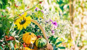 Teplé září – dobře se ovoci ivínu daří. To praví lidová moudrost azahrádkáři nezbývá než jí dát za pravdu. Vzáří vás čeká úroda ovoce izeleniny amůžete tedy plánovat, jak to vše zpracujete, uskladníte nebo zkonzumujete.