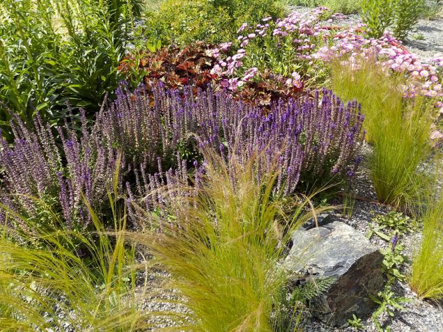 Zahradu zdobí skupina modře kvetoucích rozrazilů s rodem trav zvaných kavyl v popředí.