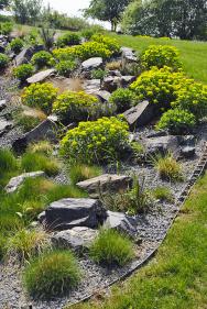 Trvalkovému záhonu s kameny dominují výsadby pryžce mnohobarvého.