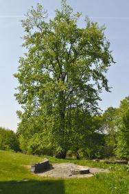 Výhled přes odpočívadlo na majestátní jilm habrolistý (Ulmus minor)