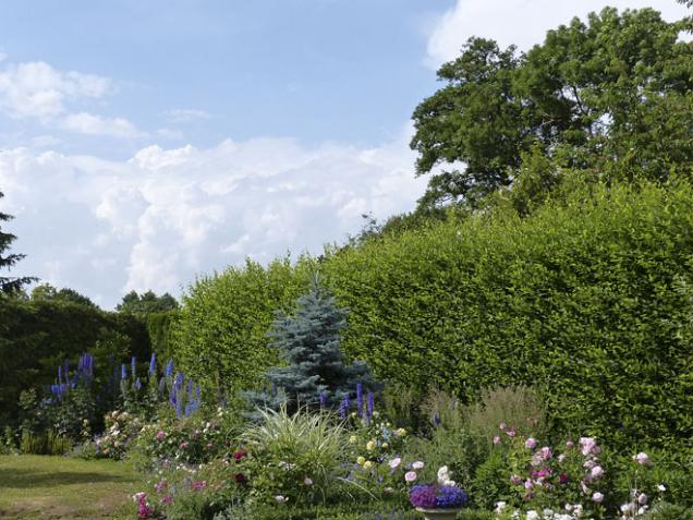 Nastaré zahradě se začíná odhranic kestředu – zde výsadba mladých habrů, které budou chránit pozemek nejen před pohledy, větrem aprachem, ale vytvoří kulisu pro záhony před nimi (2)