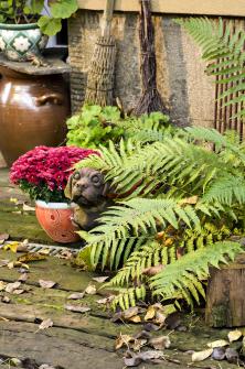 Kapradí se tváří, jako by se ho podzim vůbec netýkal. Že by svými dosud zelenými vějíři nechtělo odloudit pozornost od pestré listopadky vkvětináči?