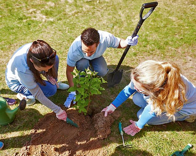Kromě listnatých stromů můžete nyní sázet také vinnou révu nebo ovocné keře.