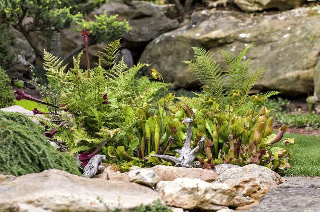 Kuriózní špirlice jsou narozdíl odfilmové Adély krotké alíbivé rostliny. Hmyz, který ale vjejich láčkách uvázne, nemá šanci naúnik.