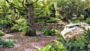 Kam se člověk podívá, tam ho překvapí hezké zátiší. Ani tady nechybějí kameny, ovšem všecku pozornost ksobě strhává opadavá metasekvoje snádhernou borkou ahebkým jehličím.