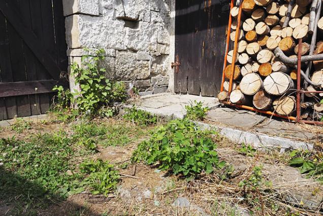 Kamenná dlažba ve spárách zarostlá plevelem (vlevo) a tatáž dlažba po očištění ocelovým kartáčem SIT pro křovinořez (3)