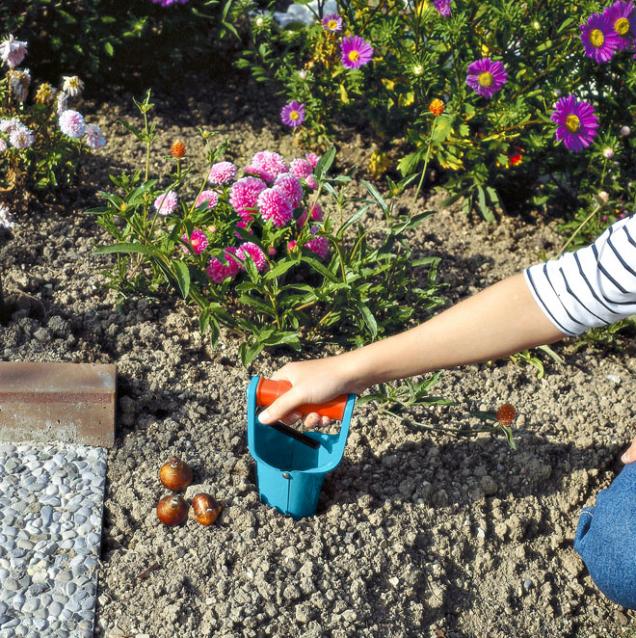 Květinové cibulky je vhodné sázet od půlky září do půlky prosince. Ideálním nářadím je sázecí kolík na cibulky.