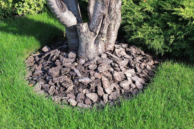 Půdu arostliny je potřeba chránit před holomrazy. Skvělou ochranu poskytuje sníh, který půdu nejen tepelně izoluje, ale během oblev také zavlažuje. Pokud sníh napadne, je proto dobré ho nahrnout na záhony. Skvělou ochranu poskytne vaší zahradě také mulčování.
