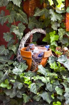 Hnízdo, zněhož vlétě vylétly mladé konopky, proměnila Irmgard vnápaditou dekoraci, která pěkně dokresluje zátiší sbřečťanem.