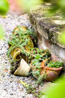 Otom, že zdánlivá ledabylost zahradě sluší, svědčí skupinka terakotových květináčů osázených suchovzdornými netřesky arozchodníky.