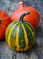 Pouze ochutnávka konkrétní odrůdy dýně vrůzných způsobech úpravy ji zařadí nebo vyřadí zpravidelného pěstování. Unás vedou oranžová hokkaida.