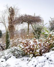 Ostrůvku s dřevinami vévodí ostříhaná vrba jíva Kilmarnock zapěstovaná na krátkém kmínku. V obrubách našly domov Iviny oblíbené levandule, které se tu samy čile rozmnožují.