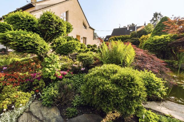 Dynamický náboj a japonskou symboliku dodávají zahradě japonské azalky (Azalea japonica) a jinan (Ginkgo biloba)