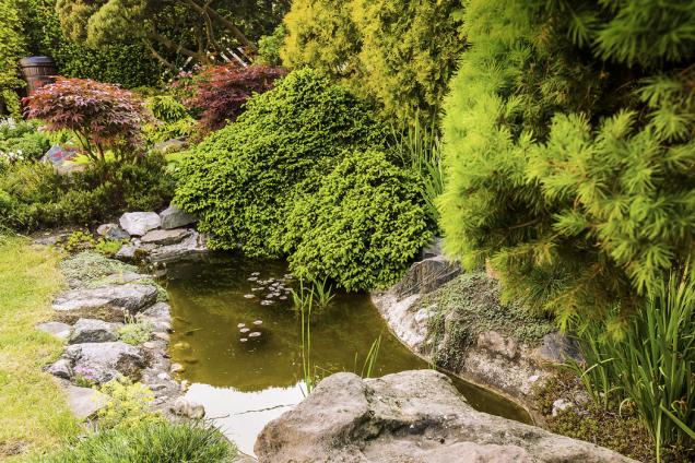 Původní, menší ze dvou jezírek s kameny  z místních řečišť patří již nezbytně k této zahradě japonského typu s bonsajemi
