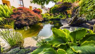 """Důležitou součástí zahrady jsou jezírka s kameny z místních řečišť, """"utopená""""  v záplavě květin, vzadu stěna obrostlá přísavníkem (Parthenocissus tricuspidata)"""