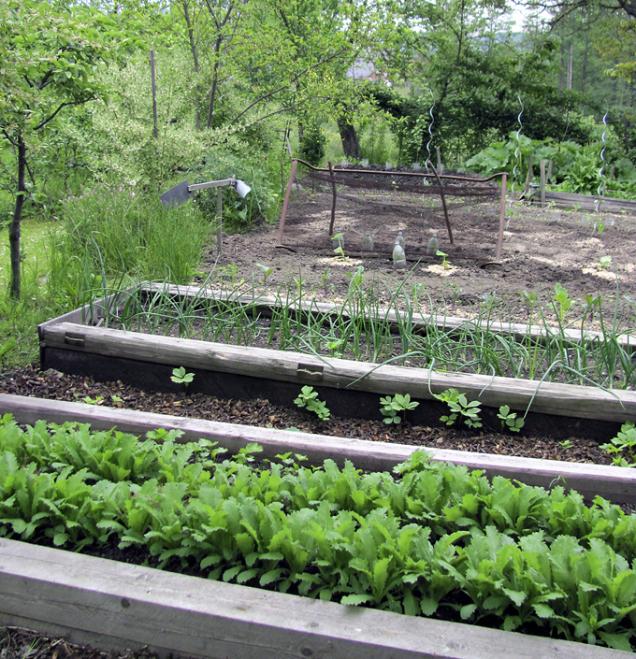 Vyšší okraje záhonů nám umožní překrýt výsadby v okrajových obdobích (jaro, podzim) sklem nebo fólií, prodloužíme si tak pěstební sezonu.