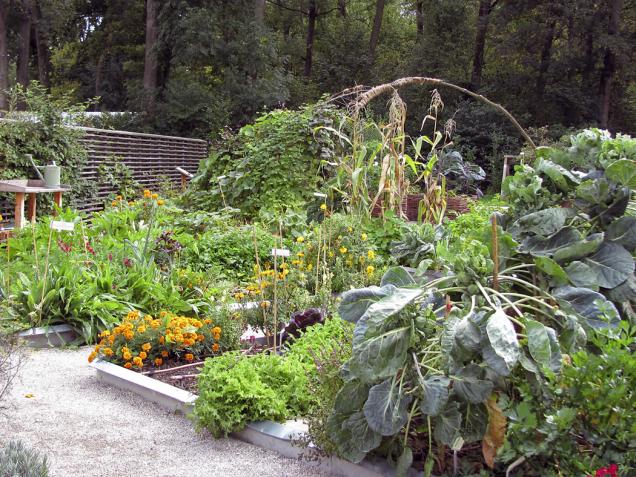 Kombinace zeleniny a bylinek je krásná a prospěšná pro zdraví rostlin.