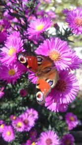 Barevné květy pocelou sezonu lákají hmyz azahrada je stále živá.