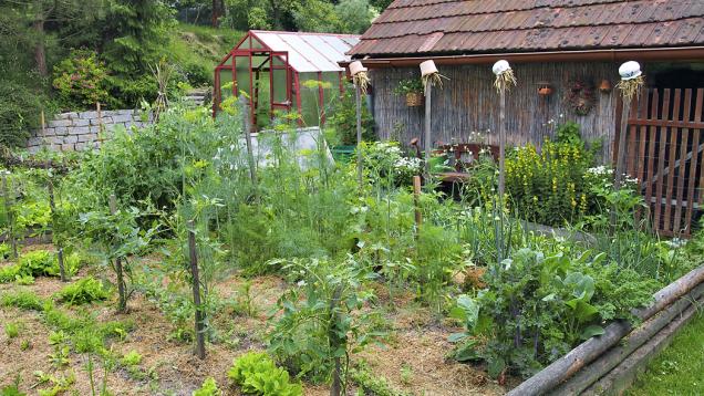 Nezbytná zeleninová zahrádka ozdobená kůly se slámou vhrnečcích, která slouží mimo jiné též jako úkryt pro užitečný hmyz.
