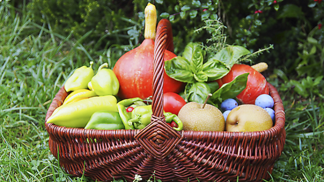 Bohatá podzimní sklizeň ovoce azeleniny, samozřejmě vbiokvalitě.