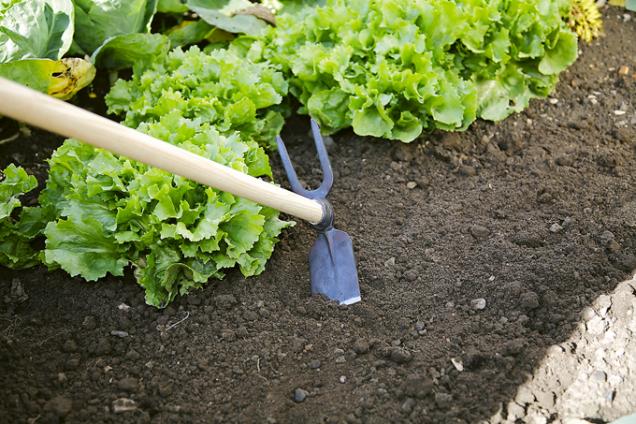 1. Zahradní motyka,výrobce: Hornbach,cena:599Kč (Hornbach)  Ruční ocelová zahradní motyka nadřevěné násadě patří mezi vysoce kvalitní nástroje zřady for q. Kromě kopací části je motyka vybavena dvojhrotým kypřičem.
