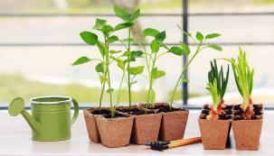 Jste-li srdcem irukama zahrádkáři, jistě se nemůžete nové sezony dočkat ajaro vyhlížíte každé ráno. Začít spěstováním rostlinek můžete třeba nabalkoně, nebo ještě dříve navašem okenním parapetu.