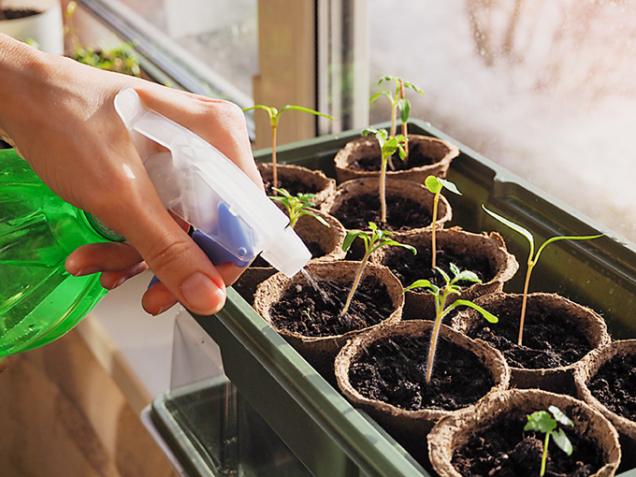 Budete-li osazovat svůj balkon nebo parapet, při výběru vhodných rostlin bude důležitá světová strana, nakterou jsou situované. Jižní strana je bohatá naslunce pocelý den. Rostlinky tu budou dobře růst aplody uzrají. Bude však potřeba dbát nato, aby rostliny neuschly. Vtom vám může pomoct vhodný výběr materiálu nádob. Izápadní avýchodní strana je pro pěstování všemožných bylinek ijiných rostlinek vhodná. Rostliny budou mít slunce kdispozici jen část dne, zato nebudou snadno vysychat.