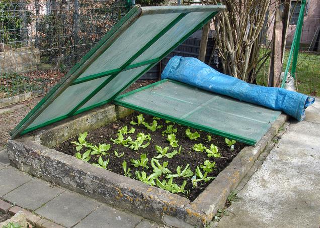Tradiční pařeniště je oblíbené, konstrukčně jednoduché, levné, účelné atrvanlivé, pokud ovšem nepotřebujete pěstovat výškově náročnější rostliny.