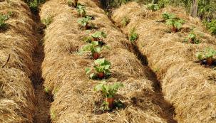 Přírodní zahrady aekologické zahradničení se stávají přirozenou součástí našich domovů. Vycházejí zpozorování přírodních procesů, ze snahy osoběstačnost, nezávislost apřizpůsobení přírodě. Základem úspěchu rodinné ekozahrady je zdravý selský rozum asnaha neškodit druhým. Vpřírodních zahradách se nepoužívají umělá hnojiva, pesticidy ani rašelina, kompostuje se biologický odpad, využívá se dešťová voda ivoda zdomácností, recyklují se zdánlivě nepotřebné předměty, zodřezaných větví se budují ohrazení kompostu či záhonu. Využívá se všech dostupných prostředků kzajištění přirozeného provozu zahrady.