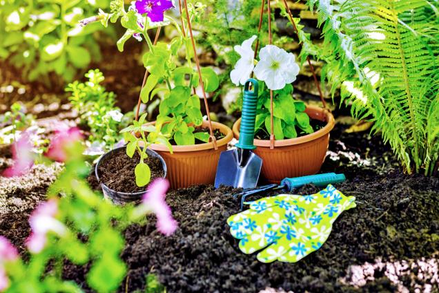 Je tu čas setí přímo do záhonů a přesazování předpěstovaných okrasných květin a zeleniny.