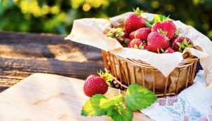 Jahody patří mezi nejoblíbenější ovoce akromě přímé konzumace mají také široké využití vgastronomii.
