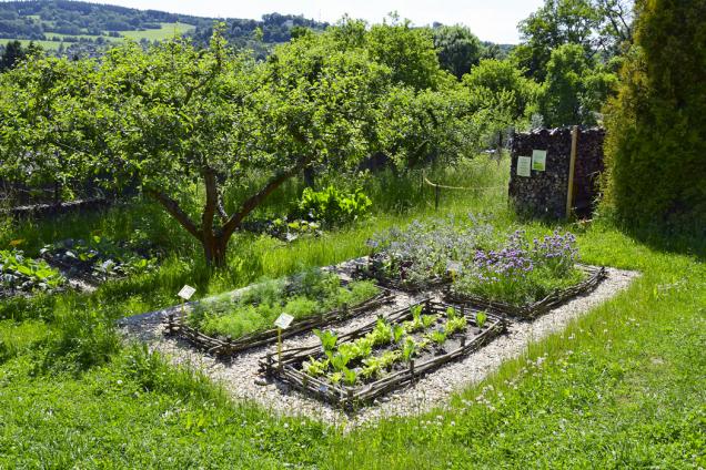 Nesmějí chybět ani zeleninové záhony. Bylinky se společně se zeleninou podporují v růstu.