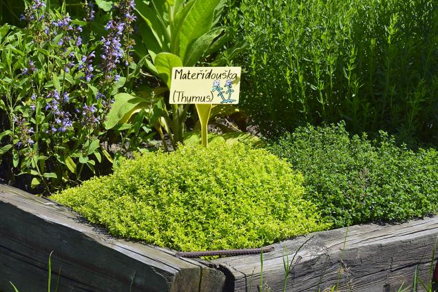 Zahrada plní také funkci vzdělávací. Za léčivými rostlinami sem jezdí zájezdy nadšenců i řada škol. Přivonět si k bylinkám je tím nejlepším začátkem pro vzdělávání.