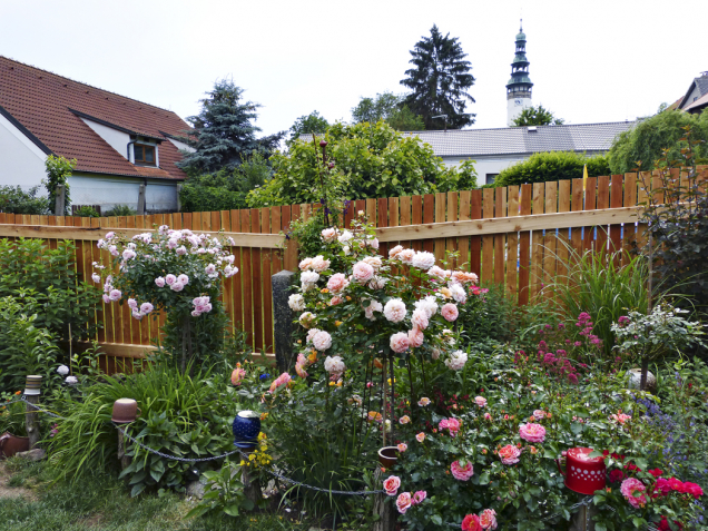 Směsice růží atrvalek kvete během celé sezony. Najdeme zde ty nejodolnější odrůdy záhonových růží – včervených tónech Planten un Blomen, Rotilia aMainaufeuer, voranžových odstínech Airbrush astromkové Schöne vom See aSunshine Babylon Eyes.