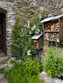 Mohutné středověké zdi zjemňuje velmi vzrostlá drobnokvětá růže The Fairy. Ujejí paty je vysazena mladší voňavá bílá růže Innocencia. Podrost tvoří bylinky adrobné květy řimbaby, mezi kameny se prodírá stříbrolistá perovskie.