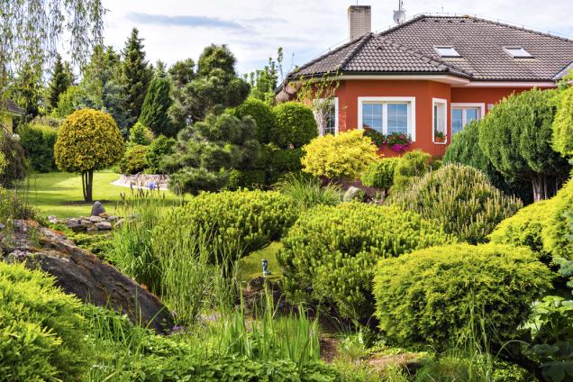 Pohled narodinný dům přes jezírko, vjehož okolí se nacházejí hlavně kosodřeviny. Vpozadí tvarovaná borovice černá (Pinus nigra Austriaca) apečlivě tvarované túje.