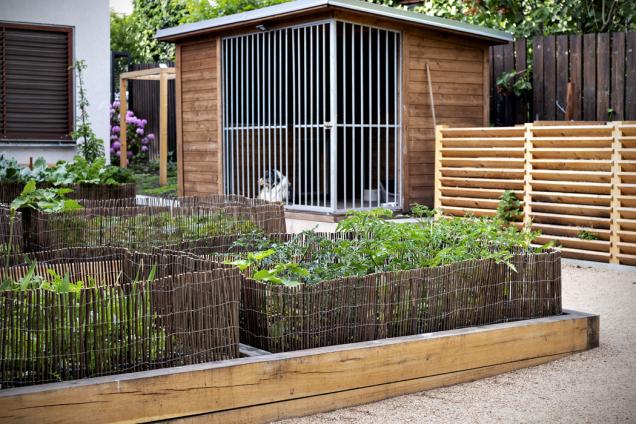 Vyvýšené zeleninové záhony se speciálním obroubením zdílny majitelů zahrady. Aby jim psi nesklízeli úrodu...